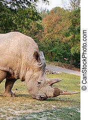 Rhinoceros in a parck - Italy