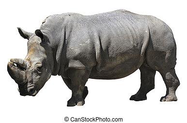 Rhinoceros - Rhino isolated over white