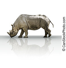Rhinoceros extracted from its zoo environment.