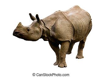 rhinoceros - iolated rhino