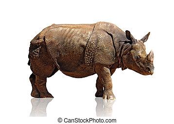 Rhinoceros - Big and heavy rhinoceros isolated in white...