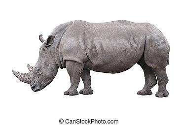 rhinoceros isolated on white background