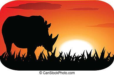 Rhinoceros with sunset