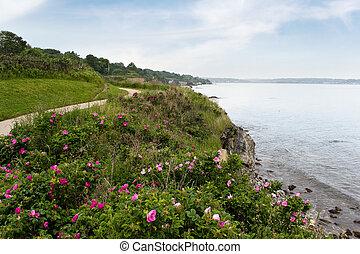 rhode, shoreline, newport, isola