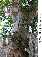 Rhodes - platanus tree looking at tourists