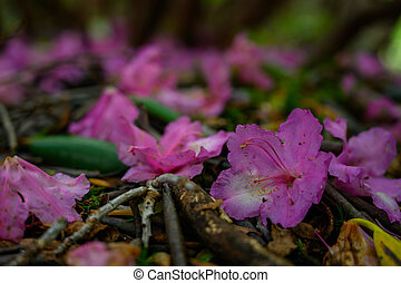 Rhododendron Blooms Lay On the Ground
