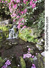 rhododendron, blumen, blühen, aus, wasserfall