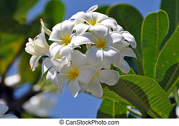 Rhododendron Flower in Full Bloom - Rhododendron flower in...