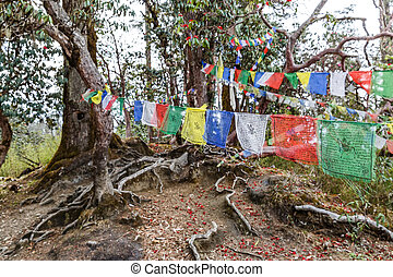 Rhododendron forest and prayer flag - Landscape photo of ...