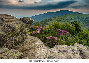 Rhododendron From the Keyhold view on Jane Bald