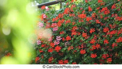 Rhododendron garden with wooden bench. - Rhododendron garden...