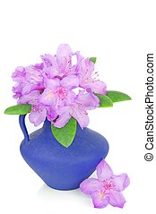 A rhododendron flower blossom in a blue vase white background
