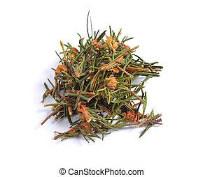 rhododendron, kraeuter, freigestellt, tomentosum, rohstoffe...