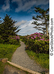 Rhododendron Line the Trail