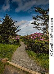 rhododendron, linha, a, rastro