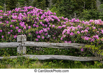rhododendron, rail, couverture, barrière