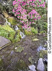 rhododendron, rosa blüten, blühen, aus, wasserfall