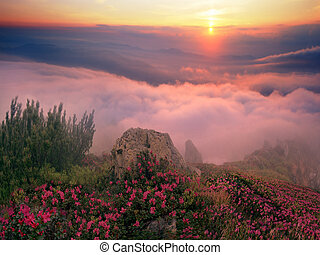 Rhododendrons, some of the most beautiful alpine flowers bloom in late spring and are particularly impressive in the early morning when the fog sun colors in incredible colors