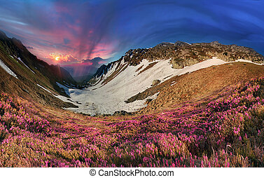 Rhododendrons of Carpathians - On the tops of the ...