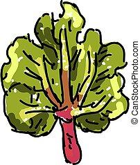 rhubarbe, illustration, blanc, vecteur, arrière-plan.