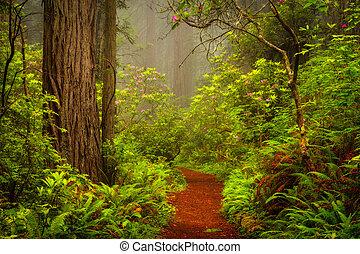 riachuelo, de, rastro, rododendros, condenación, por,...