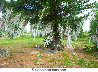 Ribbons on trees. Shamanic cult of mountains - oboo