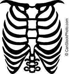 ribcage, humain