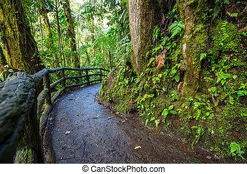rica, ジャングル, costa