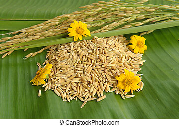 Rice and flower on green leaf background
