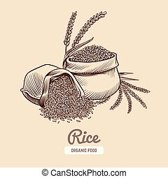 Rice background. Hand drawn bowl with rice grains and ears. ...