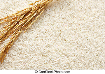 rice plant on white rice as background