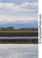 rice crops under the Alps, Italy