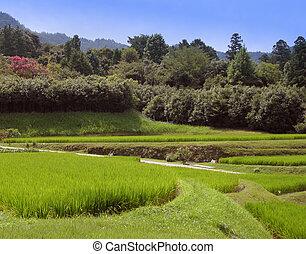 Rice Culture