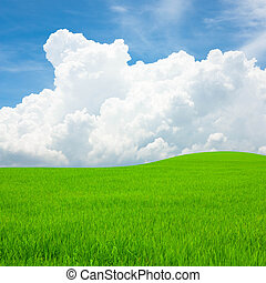 Rice field and blue sky with cloud