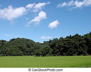 Japanese rural summer landscape with green rice field, bamboo forest and blue cloudy sky.