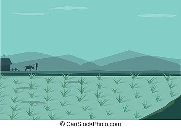 Rice field in morning, vector landscape