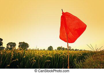Rice field in the dusk
