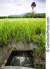 Rice field irrigation, Thailand.
