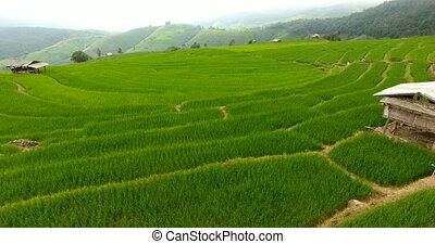 Rice field terrace on mountain agriculture land. - Asian ...