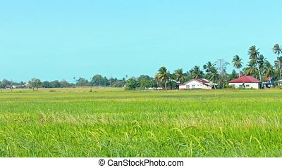 Rice Fields and a Modern Neighborhood in Southeast Asia -...
