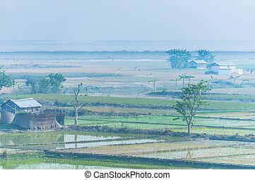 Rice fields in India, Assam near Brahmaputra river in the...