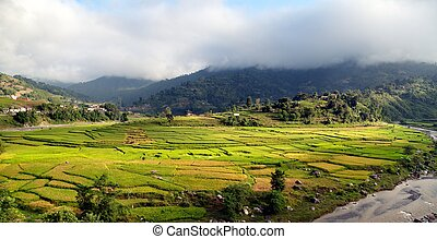 rice fields in Nepal