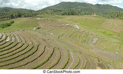 Rice fields in the Philippines. Aerial views