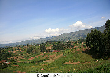 Rice Fields in Uganda, Africa