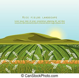 Rice fields landscape Vector. Sunshine background