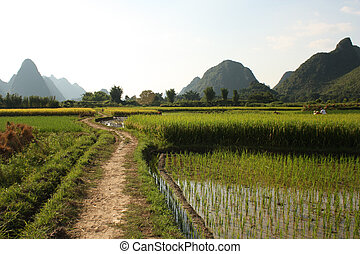 Rice fields of Southern China