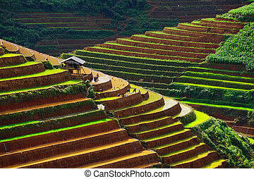 Rice fields on terrace in rainy season at Mu Cang Chai, Vietnam.