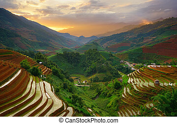 Rice fields on terrace in rainy season at Mu Cang Chai, Vietnam.