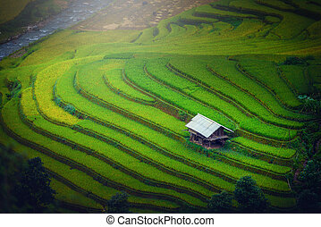 Rice fields on terraced with wooden pavilion at sunrise in Mu Cang Chai, Yen Bai, Vietnam.