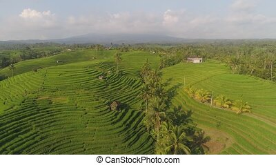 rice fields with agricultural land in indonesia - aerial...
